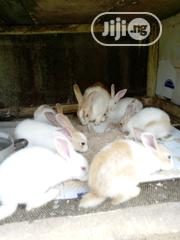 Good Rabbits | Livestock & Poultry for sale in Lagos State, Egbe Idimu