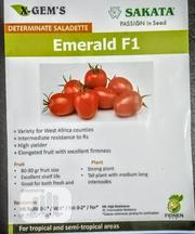 Tomatoes Sakata | Feeds, Supplements & Seeds for sale in Kano State, Fagge