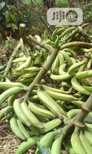 Own A Hybrid Plantain Farm For Less | Feeds, Supplements & Seeds for sale in Ogun State, Abeokuta North