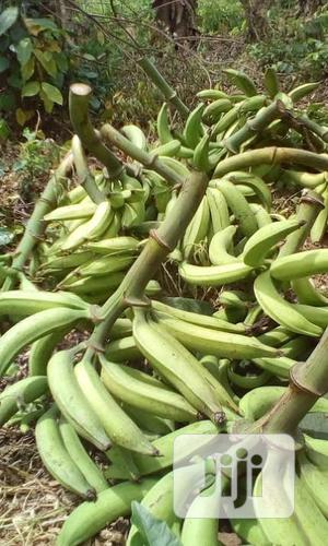 Own A Hybrid Plantain Farm For Less