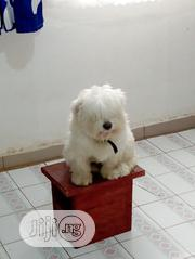 Adult Female Purebred Lhasa Apso | Dogs & Puppies for sale in Oyo State, Ibadan North