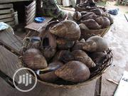 Sea Food And Bush Meat In Lagos | Party, Catering & Event Services for sale in Lagos State, Epe