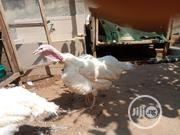 Live Turkey For Sale | Livestock & Poultry for sale in Lagos State, Ojo
