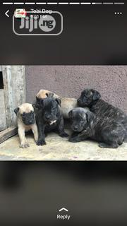Young Female Mixed Breed Boerboel | Dogs & Puppies for sale in Oyo State, Ibadan South East