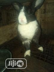 Female Rabbit | Livestock & Poultry for sale in Lagos State, Alimosho
