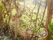 Farm Land For Rent | Land & Plots for Rent for sale in Abuja (FCT) State, Jukwoyi