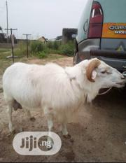 Agbo Sell | Livestock & Poultry for sale in Ogun State, Abeokuta South