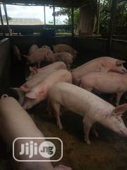 Piggery For Sale | Livestock & Poultry for sale in Ogun State, Abeokuta North