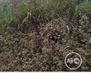2 Plots of Land for Sale on a Major Road at Ikeja | Land & Plots For Sale for sale in Lagos State, Ikeja
