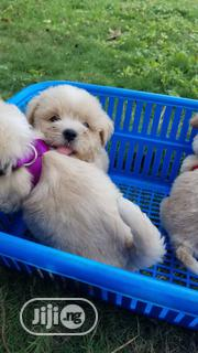 Baby Female Purebred Lhasa Apso | Dogs & Puppies for sale in Lagos State, Lagos Mainland