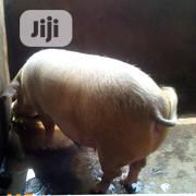 Nigerian Breed Piggs | Livestock & Poultry for sale in Lagos State, Ikeja
