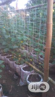 Cumcuber Seed (Hybrid) For Sales | Feeds, Supplements & Seeds for sale in Edo State, Oredo