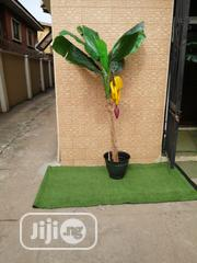 Banana Tree In Nigeria   Landscaping & Gardening Services for sale in Lagos State, Ikeja