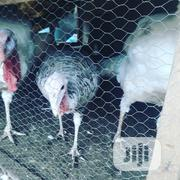 Female Turkey 4kg | Livestock & Poultry for sale in Lagos State, Lagos Mainland