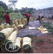 Invest In Farming And Make Up To 1.5m Quarterly | Feeds, Supplements & Seeds for sale in Ogun State, Odeda