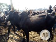 Healthy Big Cow For Sale | Livestock & Poultry for sale in Lagos State, Ilupeju