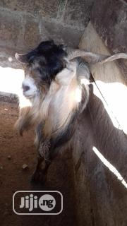 Sudan Goat Speeches | Livestock & Poultry for sale in Kwara State, Ilorin South