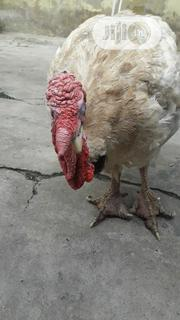 Christmas & New Year Turkey | Livestock & Poultry for sale in Lagos State, Surulere
