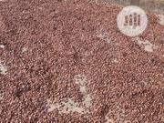 Cocoa Seed For Sale | Feeds, Supplements & Seeds for sale in Ondo State, Isua