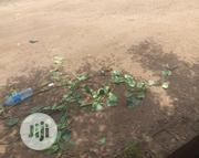 Half Plot at a Goodly Location in Aboru Iyana Ipaja Lagos | Land & Plots For Sale for sale in Lagos State, Alimosho