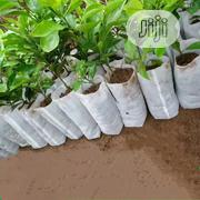 100PCS Seedling Plants Nursery Bags | Feeds, Supplements & Seeds for sale in Lagos State, Agege