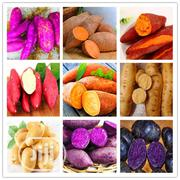 Sweet Potato Bonsai Seeds | Feeds, Supplements & Seeds for sale in Lagos State, Agege