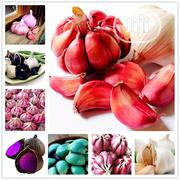 Garlic Bonsai Seeds | Feeds, Supplements & Seeds for sale in Lagos State, Agege