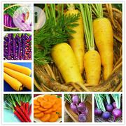 Carrot Bonsai Seeds | Feeds, Supplements & Seeds for sale in Lagos State, Agege
