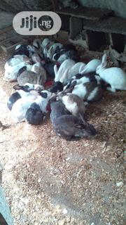 Mature Rabbits Available For Sale   Livestock & Poultry for sale in Lagos State, Ojo