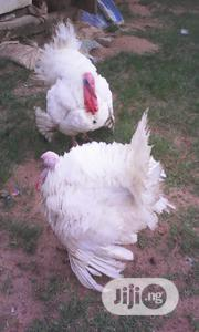 Three Giant Exotic Live Turkeys For Sale | Livestock & Poultry for sale in Ogun State, Ifo