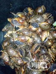 Snail Meat | Other Animals for sale in Ogun State, Ado-Odo/Ota