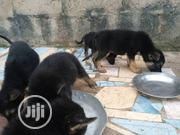 Baby Female Purebred German Shepherd Dog | Dogs & Puppies for sale in Oyo State, Ibadan North