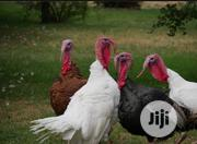 25kg Turkey For Sales | Livestock & Poultry for sale in Lagos State, Lekki Phase 2