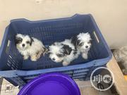 Baby Female Purebred Lhasa Apso | Dogs & Puppies for sale in Lagos State, Magodo