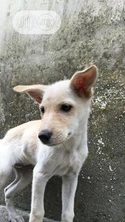 Baby Female Mixed Breed Mongrel (No Breed) | Dogs & Puppies for sale in Lagos State, Ajah