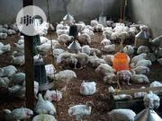 Christmas Chicken | Livestock & Poultry for sale in Abuja (FCT) State, Jikwoyi