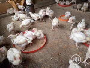 Table Size Broilers