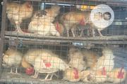 Christmas Cockerel | Livestock & Poultry for sale in Lagos State, Lagos Mainland