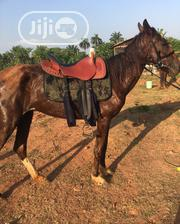 Horses For Rent | Other Animals for sale in Oyo State, Ibadan North