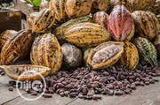 Cocoa Supplier, Per Tonne | Feeds, Supplements & Seeds for sale in Ogun State, Ijebu Ode