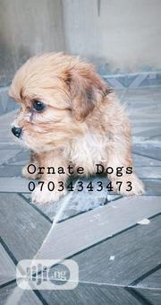 Baby Male Purebred Lhasa Apso | Dogs & Puppies for sale in Oyo State, Akinyele
