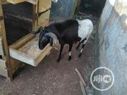 Healthy Ram | Other Animals for sale in Lagos State, Alimosho