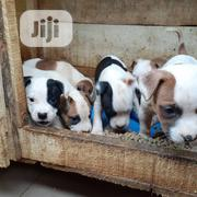 Baby Male Purebred | Dogs & Puppies for sale in Lagos State, Ifako-Ijaiye