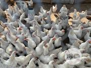 Cockerels For Sale | Livestock & Poultry for sale in Oyo State, Iseyin
