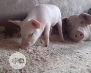 Piglets For Sale | Livestock & Poultry for sale in Abuja (FCT) State, Dutse