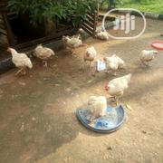 Christmas Chicken For Sale | Livestock & Poultry for sale in Edo State, Oredo