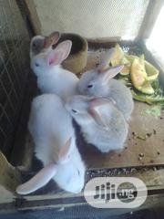 Rabbits For Sale | Livestock & Poultry for sale in Oyo State, Ibadan North