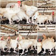 Giant Broilers/Chicken For Sale | Livestock & Poultry for sale in Lagos State, Ojo