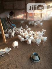 Benny-b Agro Allied Venture Sales Matured Broilers | Livestock & Poultry for sale in Nasarawa State, Karu-Nasarawa