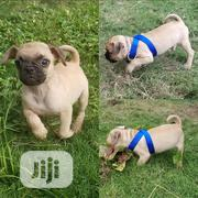 Baby Female Purebred Pug | Dogs & Puppies for sale in Abuja (FCT) State, Nyanya